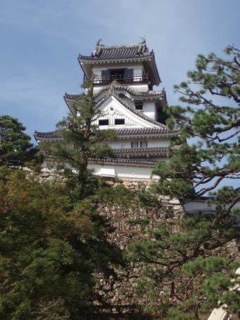 kochi4.jpg
